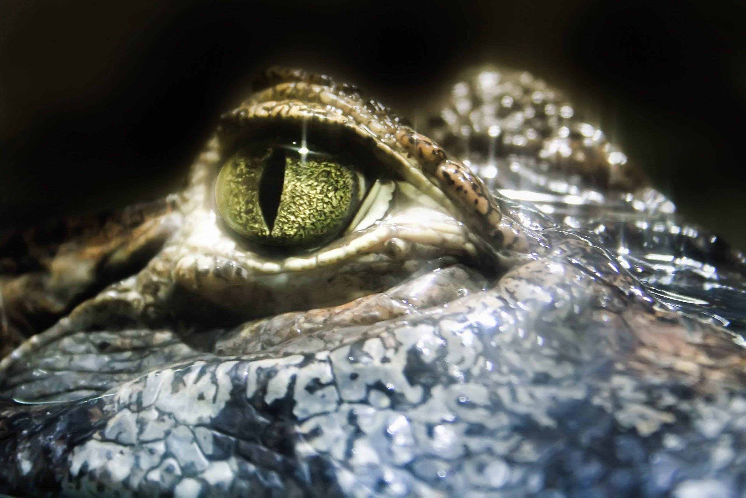Want to Win Sales? Impress the Crocodile Brain!